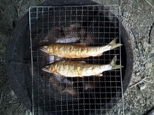 鮎 炭火焼き