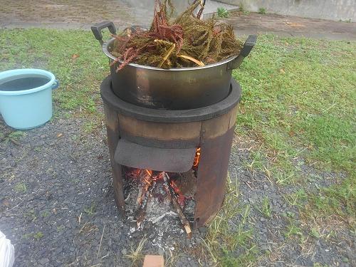 杉の葉をぐつぐつ煮出します。