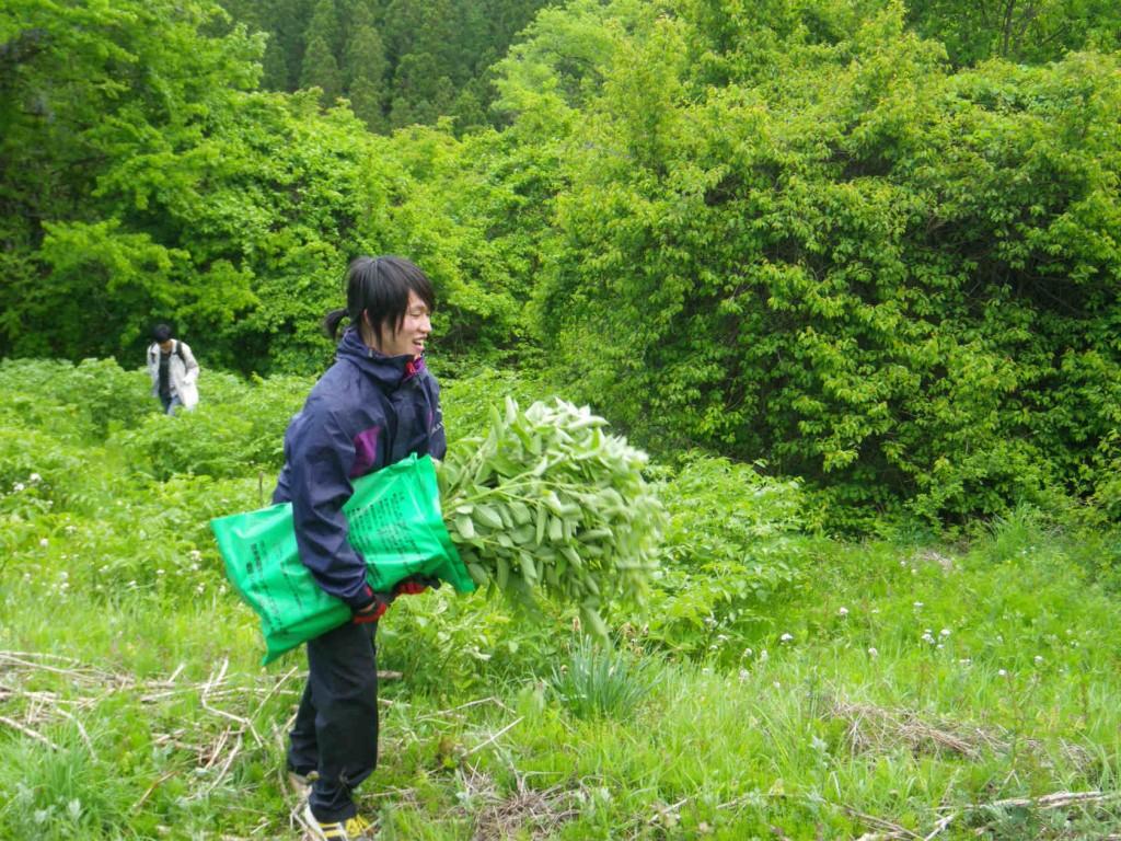 植林体験と山菜狩り 035