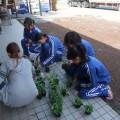 中学生が農業体験に訪れました