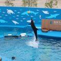 🐬長生大学移動研修で水族館へ🐬